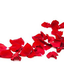 Rose Petal Turndown